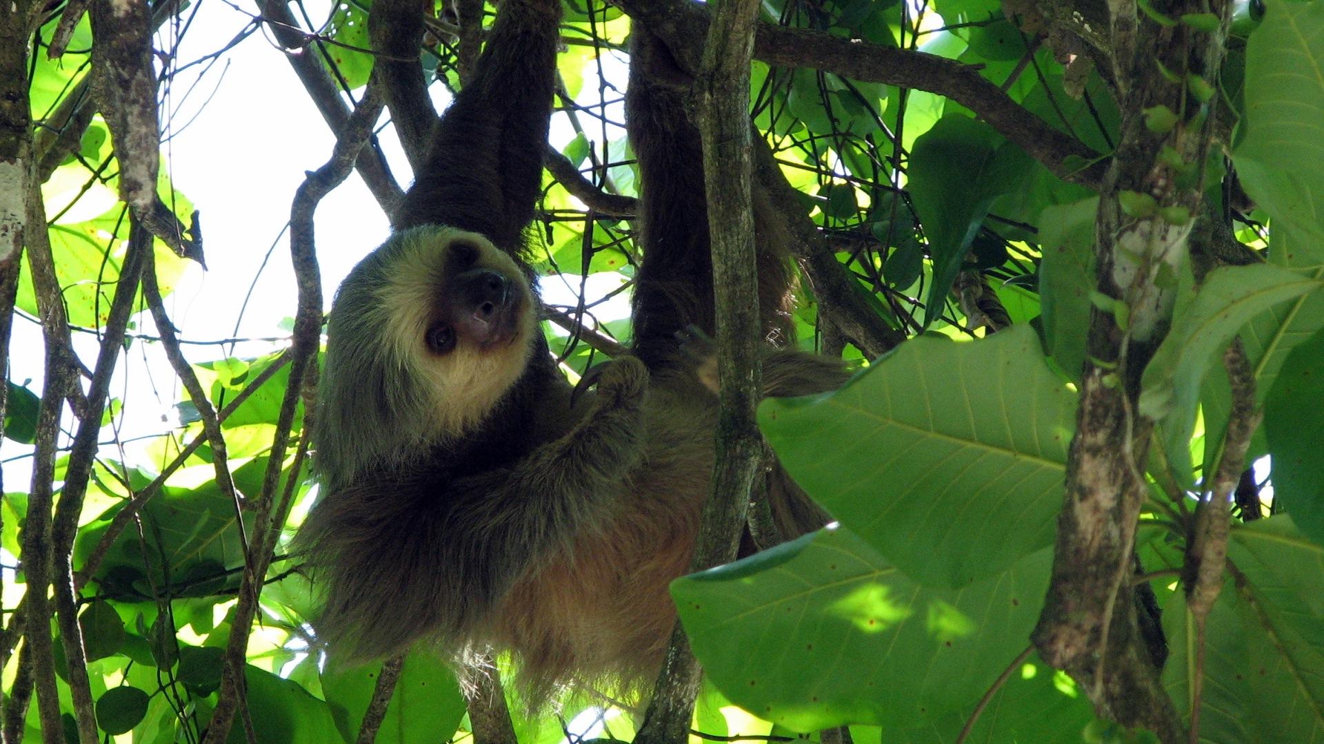 Costa Rica Wild