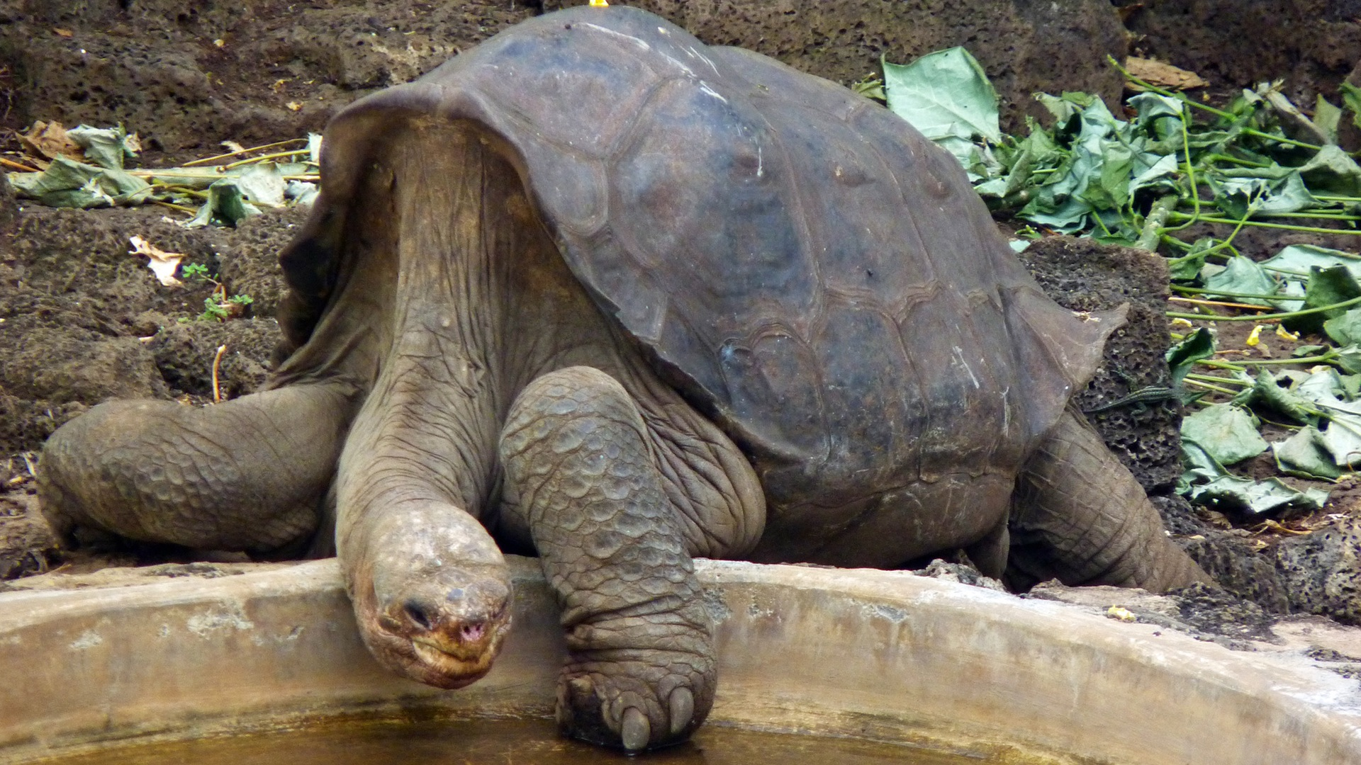 Lonesome George and the Battle for Galápagos